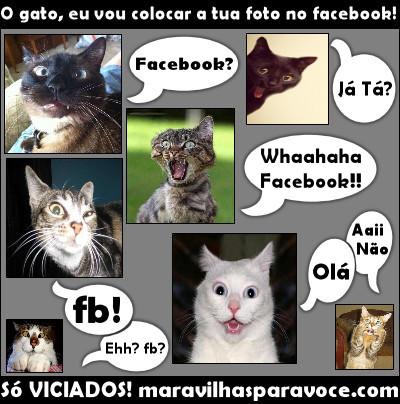 Facebook Gato
